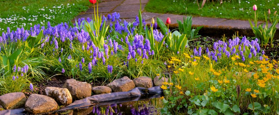 Gartenteich bepflanzen: Das sollten Sie beachten