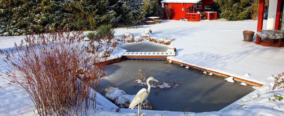 Teich winterfest machen: 7 Tipps für ein frostsicheres Gewässer