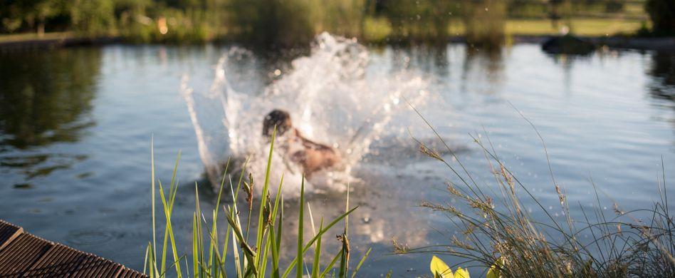 Chemiefreie Pool-Alternativen: Schwimmteich und Naturpool
