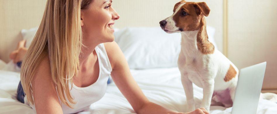 Haustiere in der Wohnung – was ist erlaubt?
