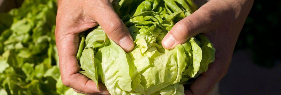 Salat länger frisch halten: Dieser Lifehack ist Gold wert