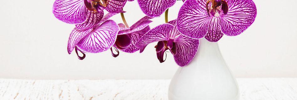 Mit Orchideen dekorieren: So setzen Sie die Blumen in Szene