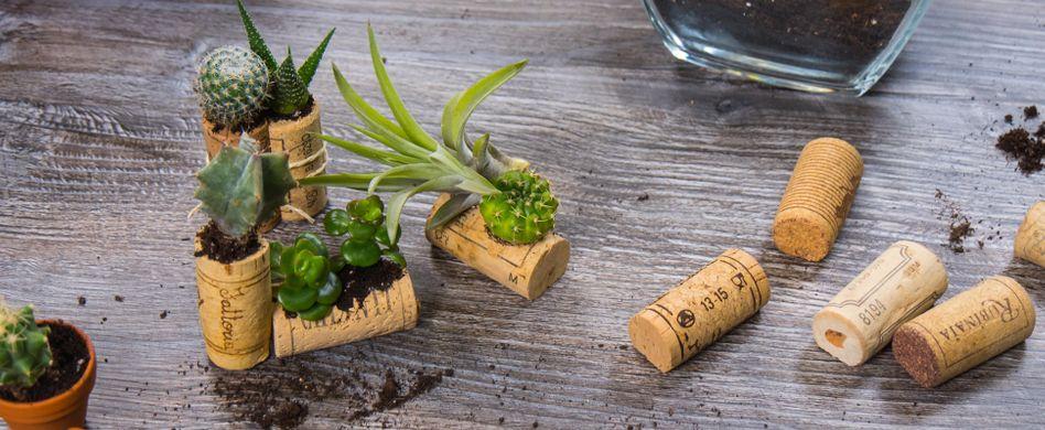 Sukkulenten in Korken: Mini-Pflanzendeko selber machen
