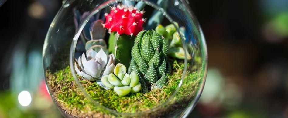 Minigarten im Glas: Wie Sie ein Miniatur-Biotop selber machen