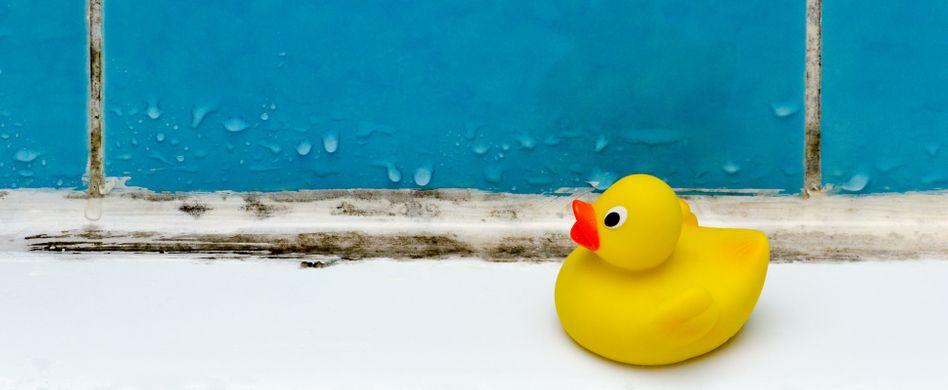 Schimmel in der Dusche entfernen: Was hilft?