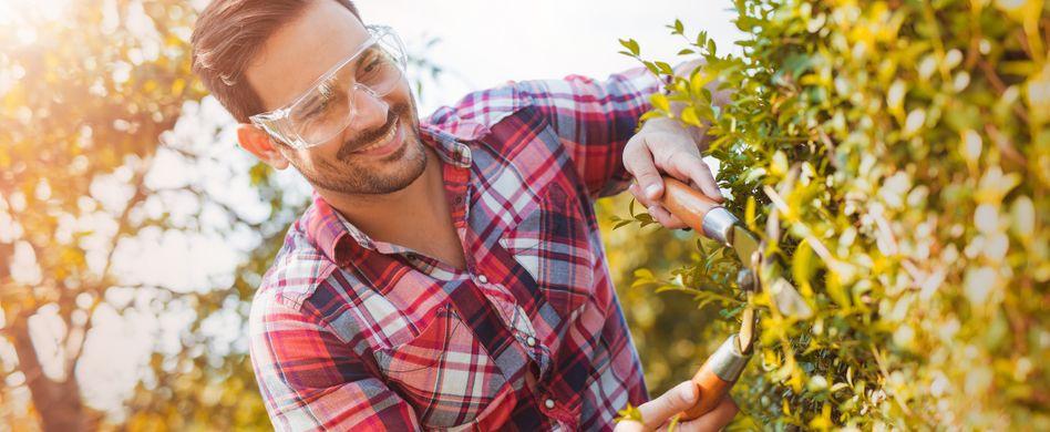Gartengestaltung – Das müssen Sie über die Hecke wissen