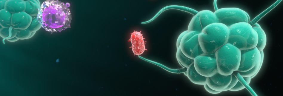 Immunsystem einfach erklärt: So funktionieren die Abwehrkräfte