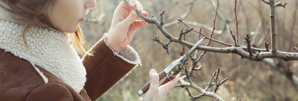Gartenarbeiten im Januar: Das ist zum Jahresbeginn zu tun
