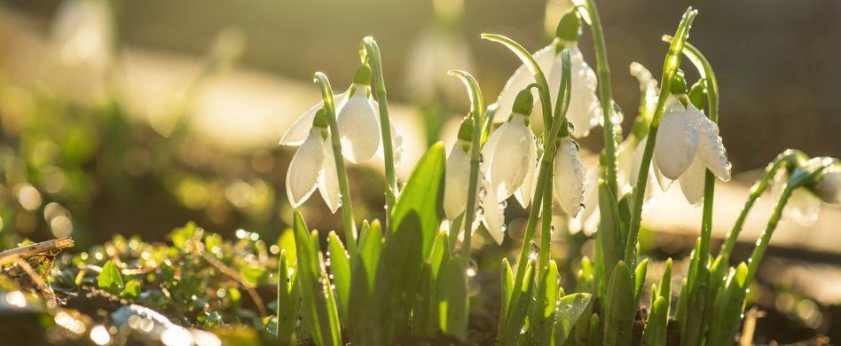 Gartenarbeit im Februar: Das sollten Sie im Februar beachten