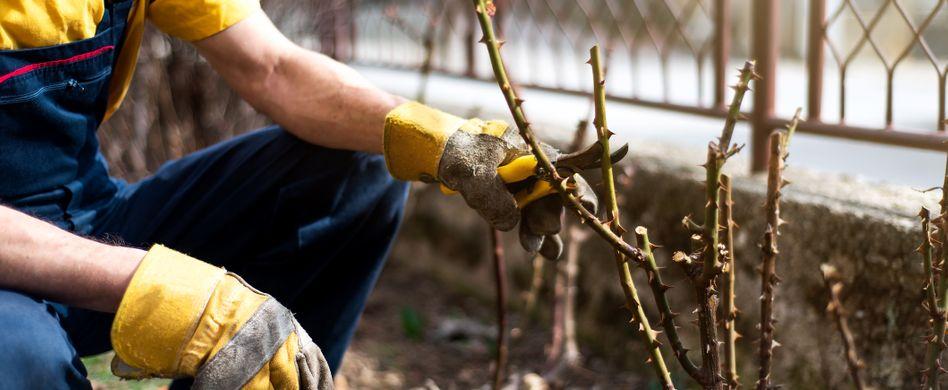 Gartenarbeiten im März: Von Rosen bis Gartenteich