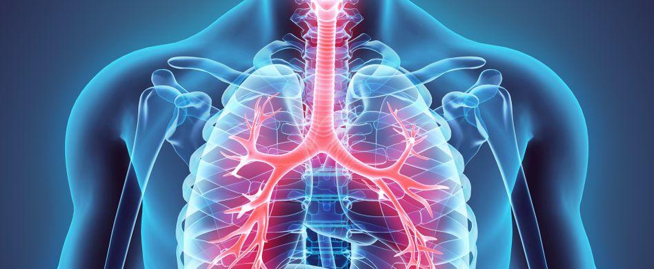 Asthma Ursachen: Das passiert in den Bronchien